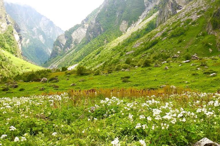 पर्यटकों के लिए खोली गई विश्व धरोहर फूलों की घाटी, लानी होगी 72 घंटे की कोरोना नगेटिव रिपोर्ट